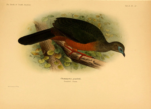 005- Pava chillona-The birds of South America 1912