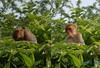 Ahh, it's time to have a nap (Cipherwa) Tags: cool ape cipher naresh sleepingape nareshpanwar urvision cipherwa