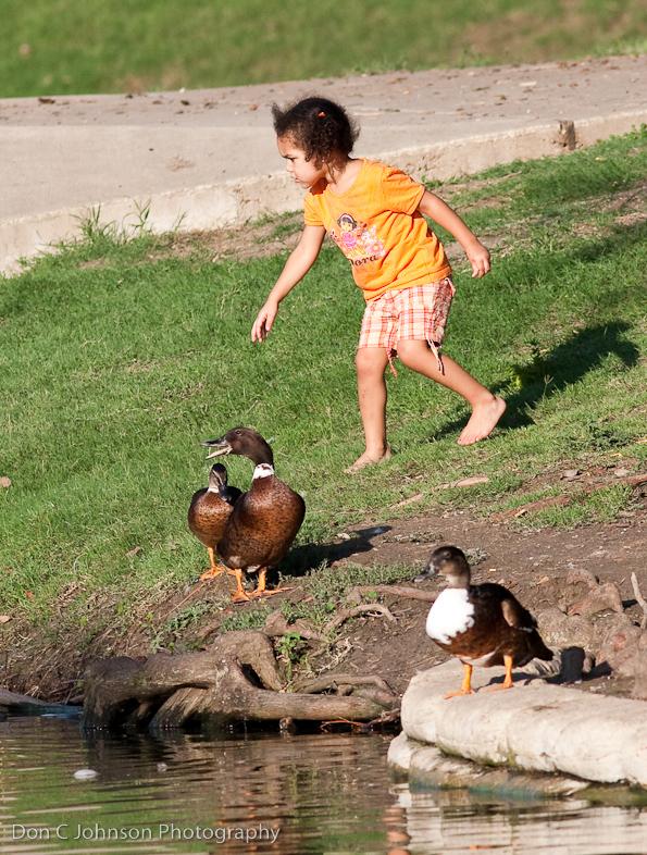 duckpond-201