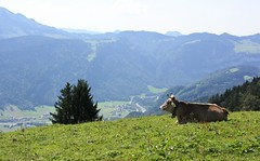 Kuh...Berge....sterreich (Lex-Zander) Tags: alps austria sterreich lindau bregenz berge alpen bregenzerwald bezau schoppernau