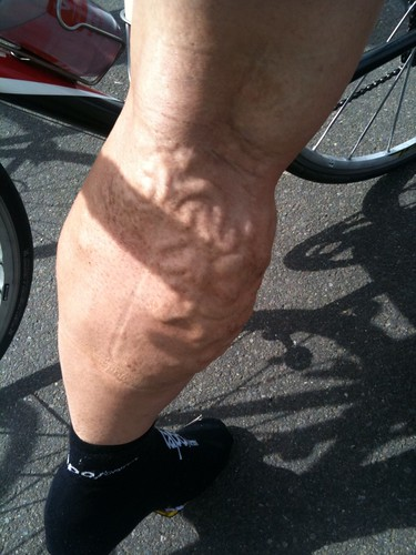 Road Map Calves