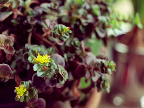 Porch Plant