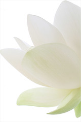 Lotus Flower Petals / Lotus Petals Macro /white_on_white - IMG_4580-1000 (Bahman Farzad) Tags: white flower macro yoga peace waterlily lotus relaxing peaceful meditation therapy whiteonwhite lotusflower lotuspetal lotuspetals lotusflowerpetals lotusflowerpetal