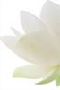 Lotus Flower Petals / Lotus Petals Macro /white_on_white - IMG_4580-1000 (Bahman Farzad) Tags: white flower macro yoga peace waterlily lotus relaxing peaceful meditation therapy whiteonwhite lotusflower lotuspetal lotuspetals lotusflowerpetals lotusflowerpetal
