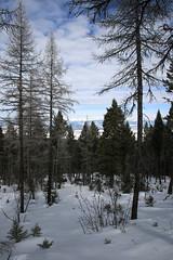 lubrecht_forest_20090215_003