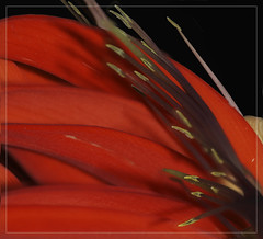 red #11 (d.teil) Tags: china red orange plants inspiration plant flower color detail macro green art up garden square hearts nikon asia colours close heart artistic blossom framed blossoms grow style blumen center frame strong shenzhen colored bud nah grn macros blume blatt 2008 bltter coloured farbe garten 2009 farbig squared bunt nahaufnahme knospe quadrat stil nahe dteil