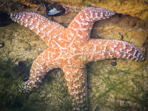 Starfish Smile