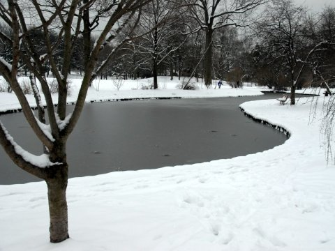 snowy Memorial Park, Maplewood