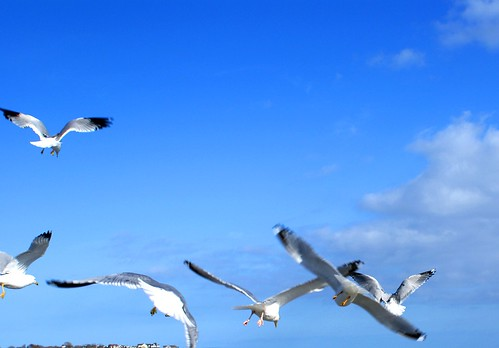 beach seagulls 6