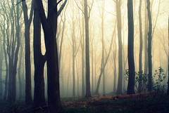 Creeping Mist (Luke Andrew Scowen 2009) Tags: trees mist fog landscape march crossprocessed sony creepy a200 foggytrees sonyalpha sonya200 lukeas09 lukescowen lukeascowen lukeascowen2009