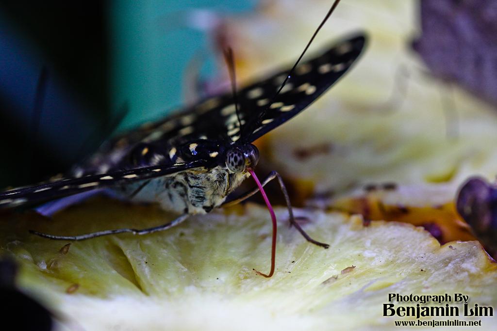 butterflyfarm01_11