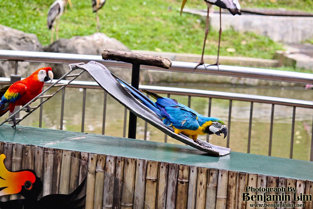 birdpark1_39