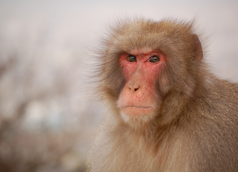 _monkey-17_