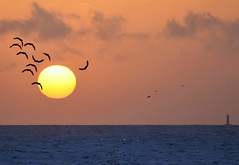 yesterday seagulls and sunset (paolo brunetti) Tags: sunset sea sky seagulls canon faro tramonto mare cielo yesterday livorno gabbiani houselight 450d 1000d
