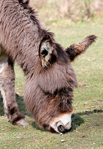 280309 Donkey
