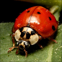 ~ LadyBug ~