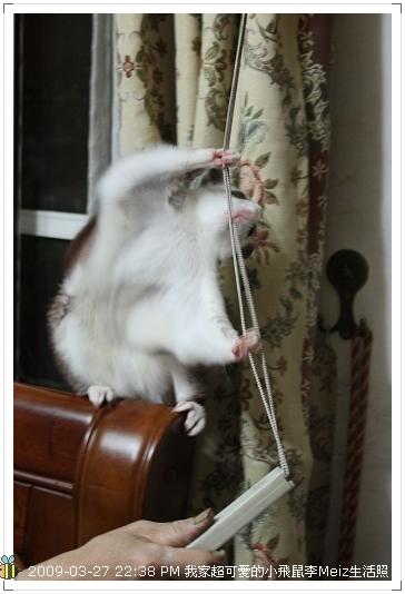 09年二三月小飛鼠Meiz生活照 (33)