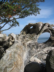 IMG_2929 (mctowi) Tags: strand rgen holz strandgut ostsee steilkste mecklenburgvorpommern baumstamm baumwurzel