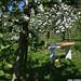 Schneidbrett-in-Apfelbaumplantage