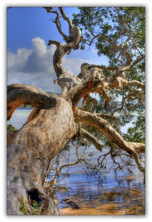 Smiths Lake NSW