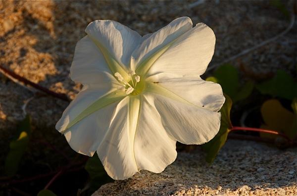 flower_0345