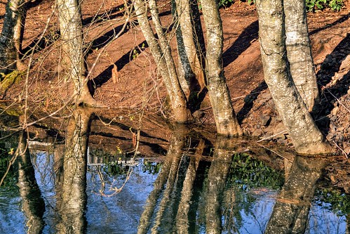 Reflection of trees in a pond in Stayton Oregon