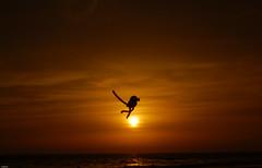 Sun Football - A different 'ball game'! ([s e l v i n]) Tags: sunset sun game beach silhouette monkey fly football goal alien ballgame bombay mumbai versova versovabeach airkick ©selvin kicksun