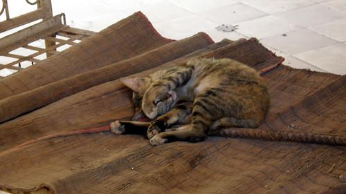040.只有小貓不畏懼的躺在刑床上