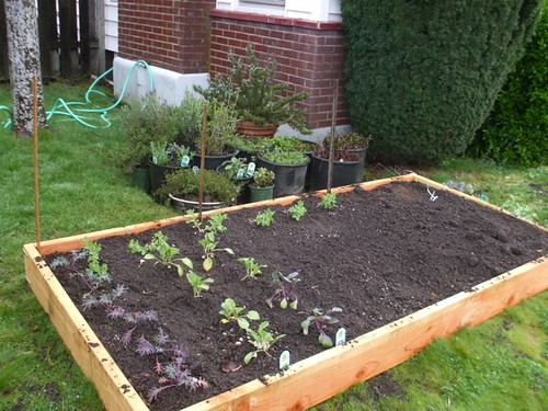 garden - week 1