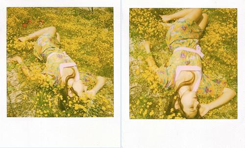 Yellow polaroids