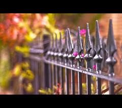 ~ Spears! ~ (©Komatoes) Tags: uk fence 50mm nikon explore devon f18 railings 160 totnes d40 nikond40