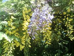 IMAG0005 (Ian Faz) Tags: flowers plants tress nessgardens