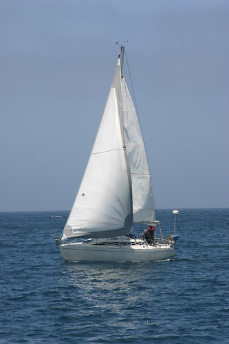 A sail boat in the bay