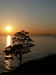 1060516 lone tree sunset (Feist, Michael - FunnyFence - catchthefuture) Tags: ocean sanfrancisco seattle bridge light sunset usa moon lighthouse reflection green art beach window water glass ferry vancouver sailboat sunrise island foxy harbor shark boat waterfall washington earthquake concert rainbow woods funny wolf surf kayak basket eagle wind native wizard spirit earth stage clown tiger ghost gig surfing sierra tsunami pomo yosemite sound elin whale balance indians orca olympic newmoon earthquakes tornado strait wolves puget buoy frisco bluemoon 2010 ohlone haro miwok buoyant catchthefuture