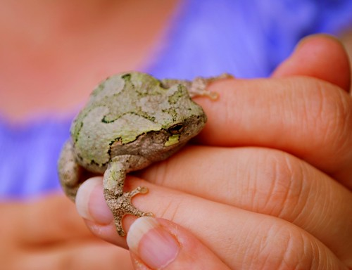 Frog hand