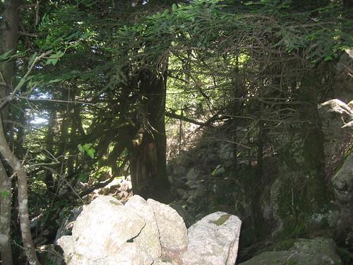 Apaseu - Funtanella : lignes de cairns en sous-bois