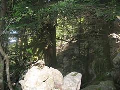 raversée retour Apaseu - Funtanella : lignes de cairns en sous-bois