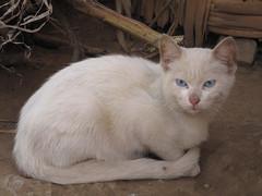 El Gato.