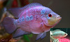 baby 7aleema (Exploooored Aug 2, 2009 #357 ) (Still Alive ..) Tags: fish canon grow growing kuwait q8 growup stillalive 400d moiq8