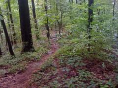 9 - Lumpkin Ridge 1