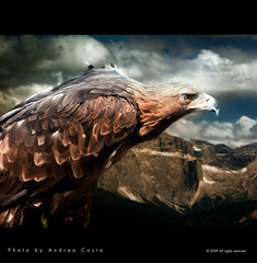 Eagle (Andrea Costa Creative) Tags: desktop wallpaper macro tree art nature closeup illustration photoshop canon painting creativity photography design interesting bravo paint arte post graphic background postcard creative myspace powershot comunicazione explore concept retouch ideas retouching disegno sx1 grafica facebook linkedin interessi comunication photorealistic postprocessing fotoritocco windflower bestphoto photoretouching illustrazione metadesign fotorealismo ritocco netlog andreacosta vosplusbellesphotos feedly artofimages sx1is sx1best actheart bestcapturesaoi magicunicornverybest magicunicornmasterpiece obramaestra socialimg mygearandme mygearandmepremium mygearandmebronze mygearandmesilver mygearandmegold mygearandmeplatinum ayrphotosanimalsaction