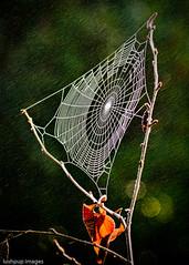 ...mistcatcher... (Geoff...) Tags: winter mist cold green fog droplets drops nikon bokeh spiderweb naturallight australia droplet canberra naturesfinest d80 nikkor75300mm notextureadded lushpupimages gorgeousgreenthursday lushpup