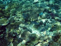 Gt Barrier Reef (C) 2009