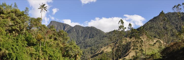 05_valle_cocora_0188a