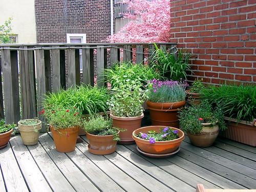 Charming Garden Design With Container Gardens For Decks Danasoka.top With  Landscaping Rocks Ideas From Danasoka