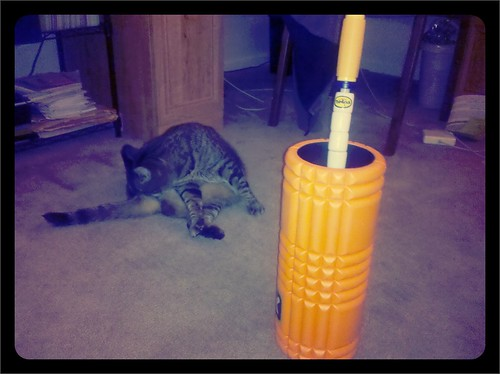 Today's delivery: foam roller, the stick. With Olive bathing.