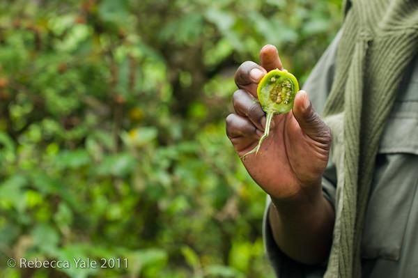 RYALE_Rwanda_Uganda_Safari-70