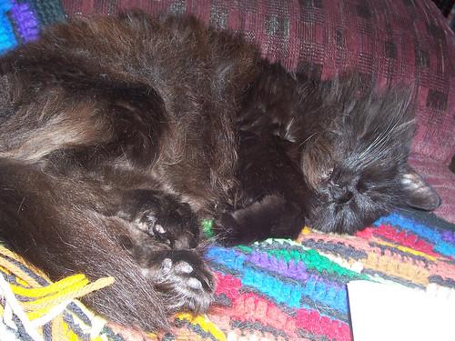 Mocus Sleepy