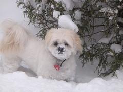 Noodles LOVES snow!!