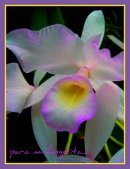 para mi Angelita (IDIAY) Tags: colors costarica orchids colores orquideas tqm angelita